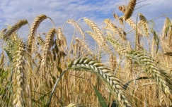 The benefits of whole grains for swimming and weight loss
