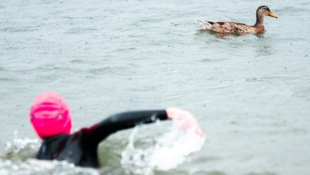 Ask the Expert: Ed Williams on how to prepare for an open water swim